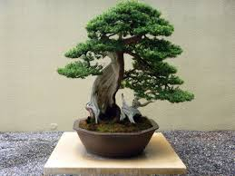 Lessons of the Bonsai